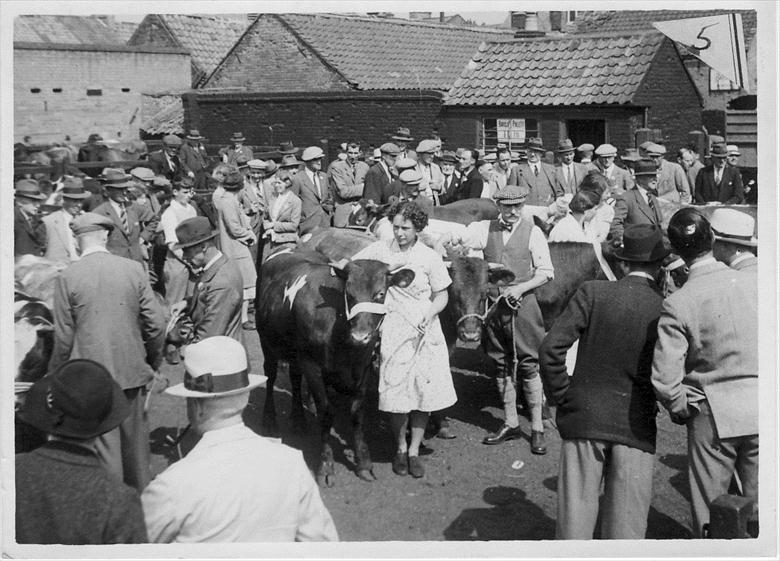 Photograph. North Walsham Calf Club at the North Walsham Cattle Market, Yarmouth Road. Now the site of Roys Store. Photo R.E.R.Ling (North Walsham Archive).